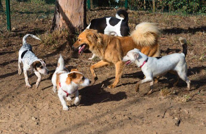 Alenquer inaugura parque canino